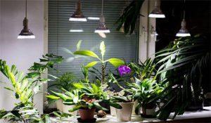 تاثیر نور لامپ بر رشد گیاهان